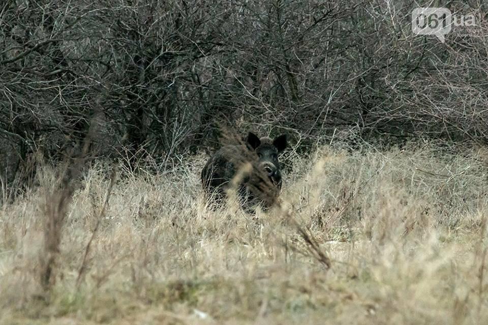Запорожский фотограф-натуралист запечатлел на Хортице диких оленей и кабанов, – ФОТО, фото-6