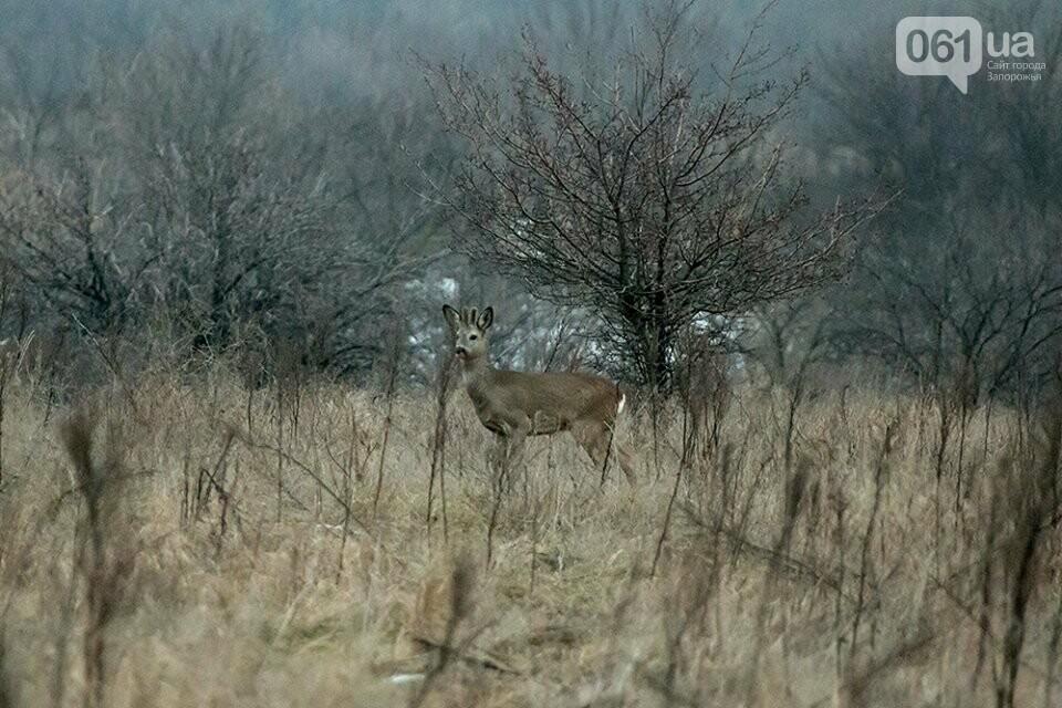Запорожский фотограф-натуралист запечатлел на Хортице диких оленей и кабанов, – ФОТО, фото-9