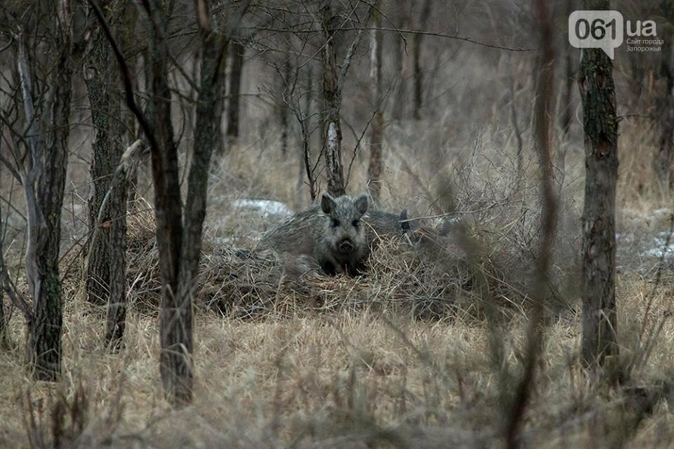 Запорожский фотограф-натуралист запечатлел на Хортице диких оленей и кабанов, – ФОТО, фото-3