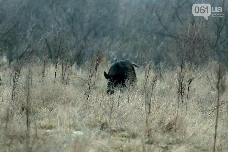 Запорожский фотограф-натуралист запечатлел на Хортице диких оленей и кабанов, – ФОТО, фото-7
