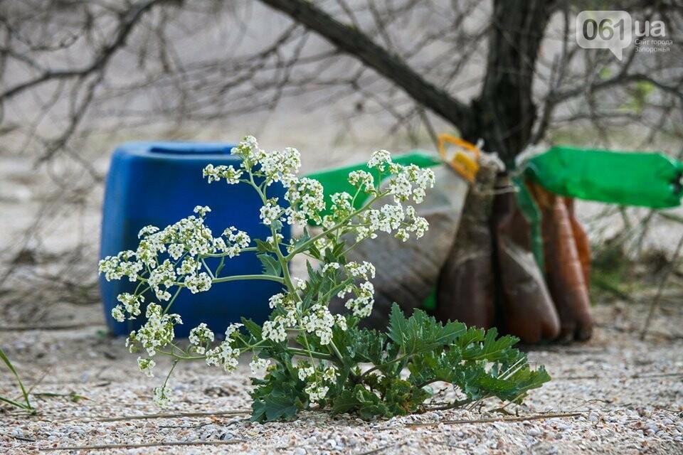 В Кирилловке провели масштабный субботник – вывезли 10 тонн мусора, - ФОТОРЕПОРТАЖ, фото-2