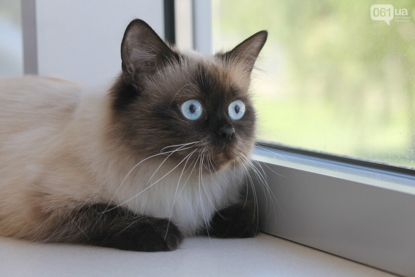 В Запорожье на выставке кошек показали 130 питомцев со всей Украины, – ФОТОРЕПОРТАЖ, фото-2
