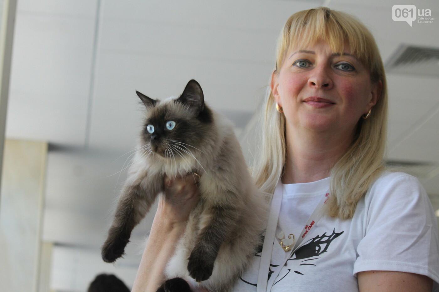 В Запорожье на выставке кошек показали 130 питомцев со всей Украины, – ФОТОРЕПОРТАЖ, фото-21