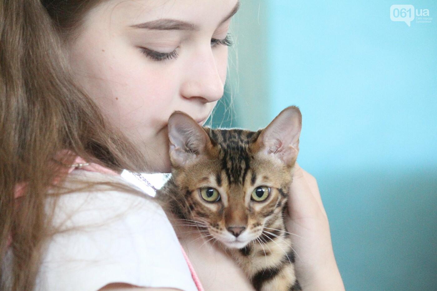 В Запорожье на выставке кошек показали 130 питомцев со всей Украины, – ФОТОРЕПОРТАЖ, фото-14