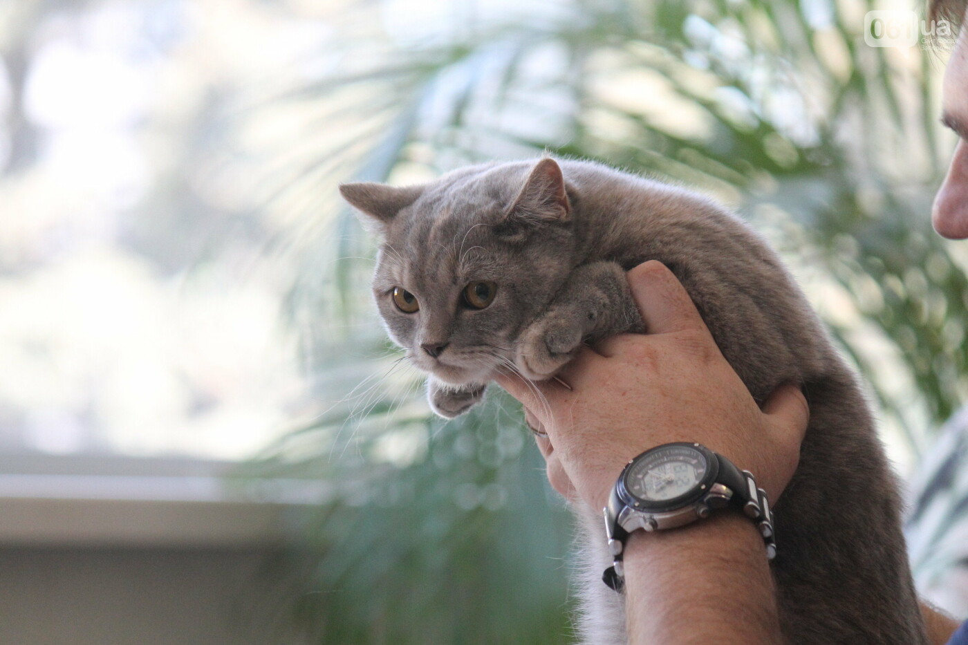 В Запорожье на выставке кошек показали 130 питомцев со всей Украины, – ФОТОРЕПОРТАЖ, фото-43