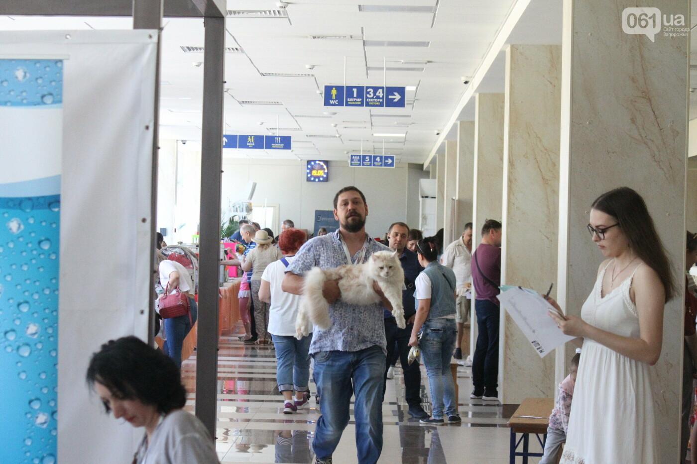 В Запорожье на выставке кошек показали 130 питомцев со всей Украины, – ФОТОРЕПОРТАЖ, фото-17