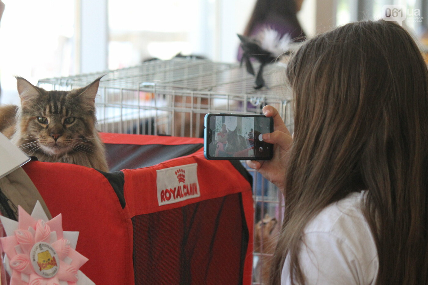В Запорожье на выставке кошек показали 130 питомцев со всей Украины, – ФОТОРЕПОРТАЖ, фото-31