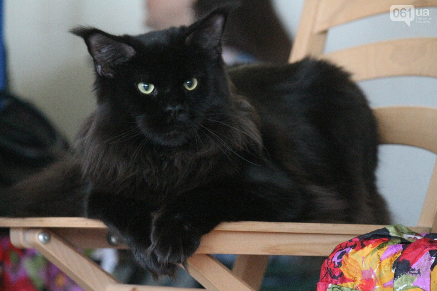В Запорожье на выставке кошек показали 130 питомцев со всей Украины, – ФОТОРЕПОРТАЖ, фото-35