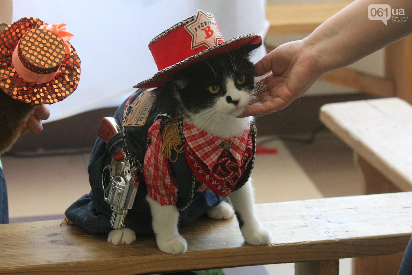 В Запорожье на выставке кошек показали 130 питомцев со всей Украины, – ФОТОРЕПОРТАЖ, фото-32