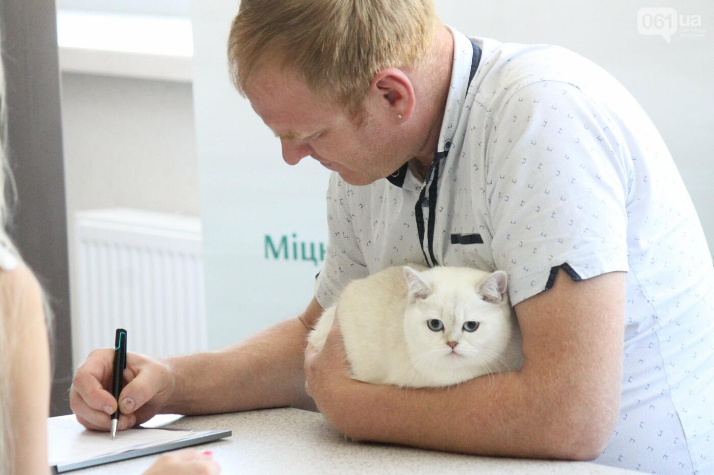 В Запорожье на выставке кошек показали 130 питомцев со всей Украины, – ФОТОРЕПОРТАЖ, фото-36
