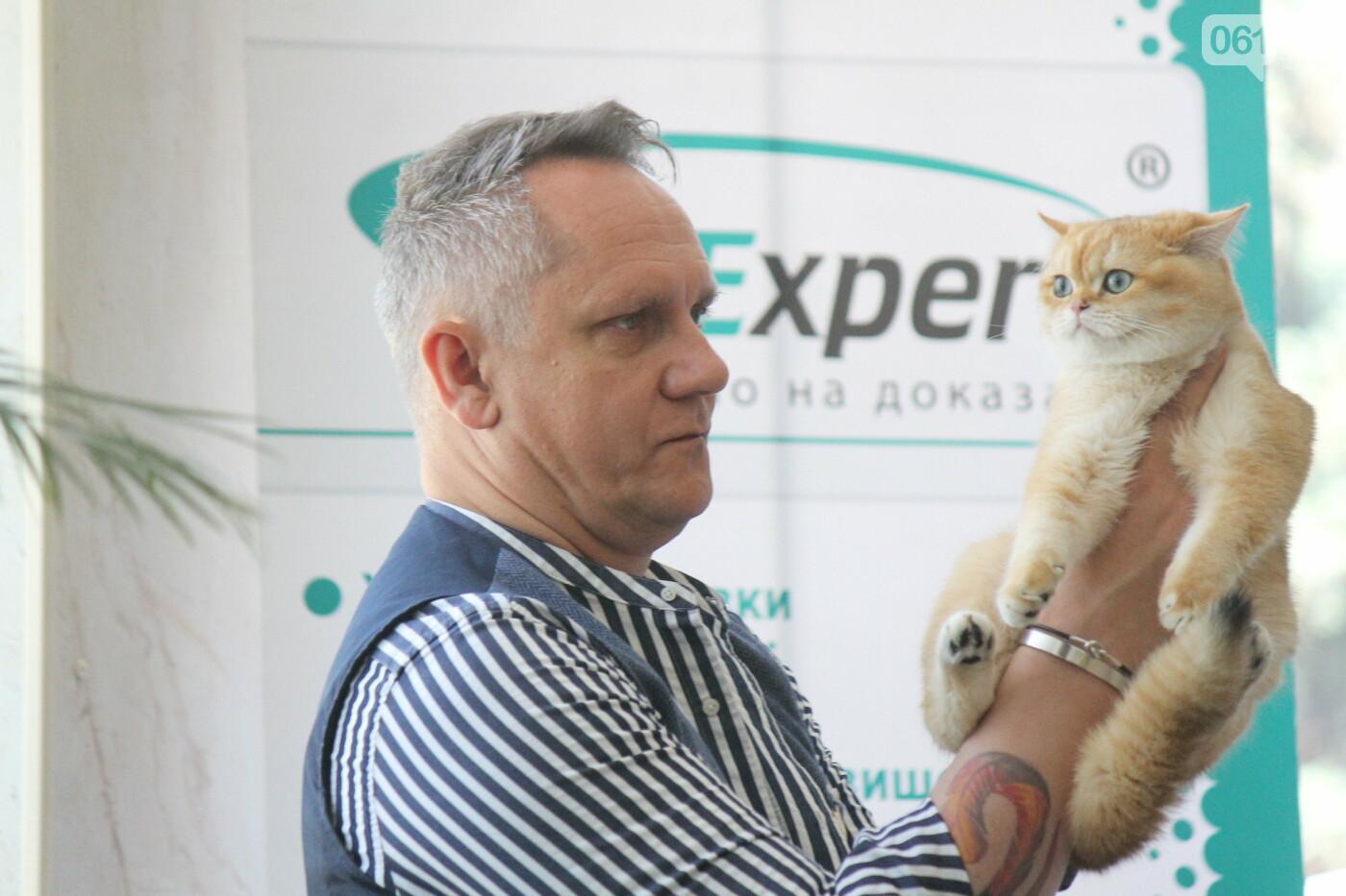 В Запорожье на выставке кошек показали 130 питомцев со всей Украины, – ФОТОРЕПОРТАЖ, фото-37