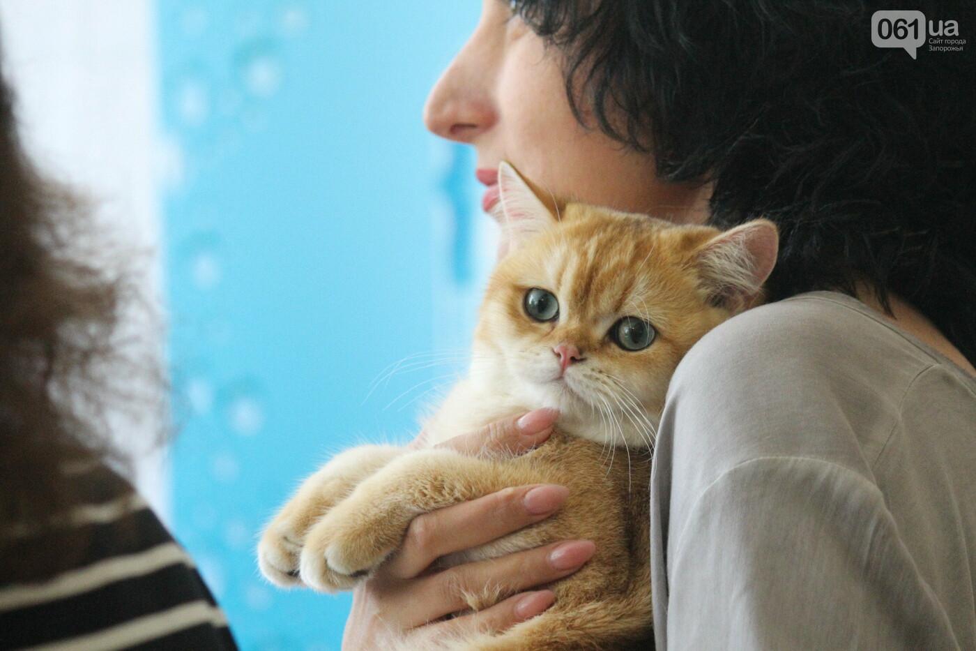 В Запорожье на выставке кошек показали 130 питомцев со всей Украины, – ФОТОРЕПОРТАЖ, фото-39