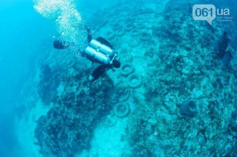 В Бердянске из покрышек создают искусственные рифы - в Европе такой эксперимент считают опасным, - ФОТО, фото-1