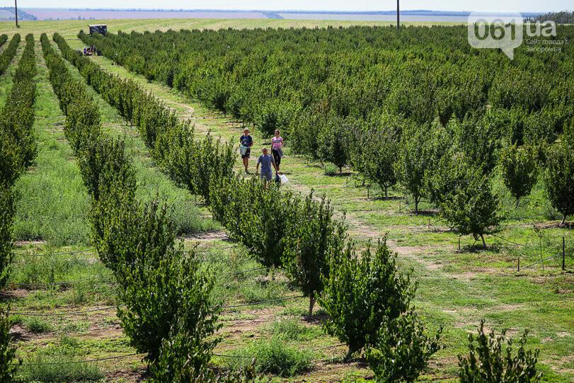 Тонны ягод: как в саду в Запорожской области собирают урожай кизила, - ФОТОРЕПОРТАЖ, фото-3