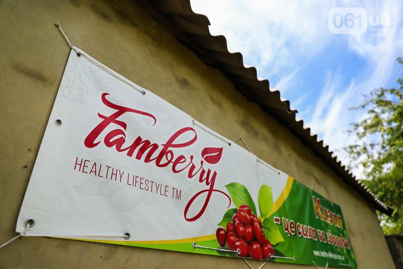 Тонны ягод: как в саду в Запорожской области собирают урожай кизила, - ФОТОРЕПОРТАЖ, фото-5