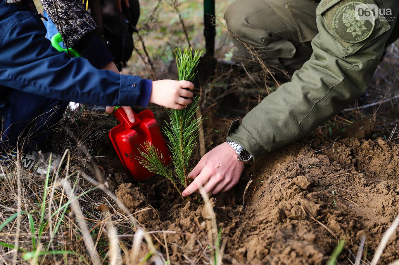 """""""Новая жизнь Хортицы"""" : на заповедном острове высадили 200 дубов и сосен, - ФОТОРЕПОРТАЖ, фото-15"""