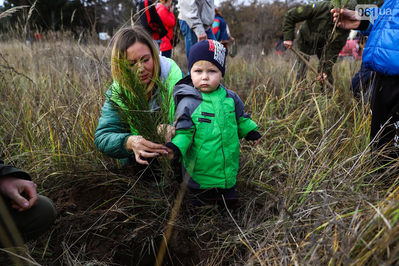 """""""Новая жизнь Хортицы"""" : на заповедном острове высадили 200 дубов и сосен, - ФОТОРЕПОРТАЖ, фото-4"""