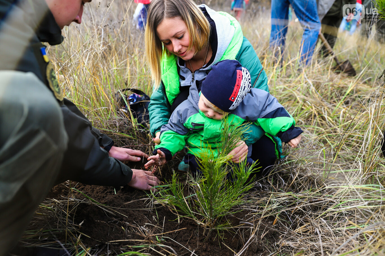 """""""Новая жизнь Хортицы"""" : на заповедном острове высадили 200 дубов и сосен, - ФОТОРЕПОРТАЖ, фото-6"""