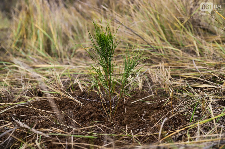 """""""Новая жизнь Хортицы"""" : на заповедном острове высадили 200 дубов и сосен, - ФОТОРЕПОРТАЖ, фото-22"""