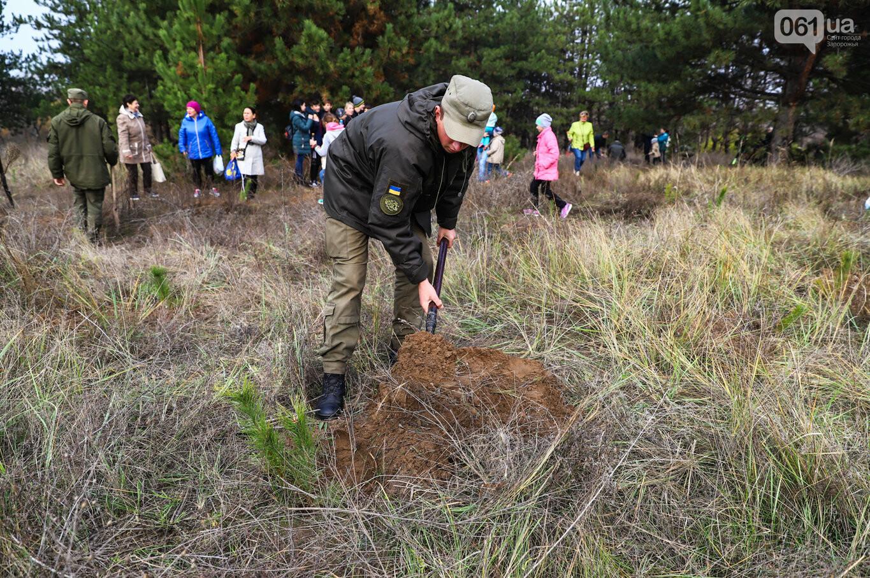 """""""Новая жизнь Хортицы"""" : на заповедном острове высадили 200 дубов и сосен, - ФОТОРЕПОРТАЖ, фото-24"""