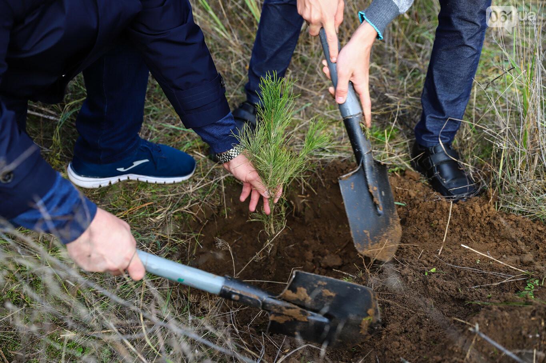 """""""Новая жизнь Хортицы"""" : на заповедном острове высадили 200 дубов и сосен, - ФОТОРЕПОРТАЖ, фото-29"""