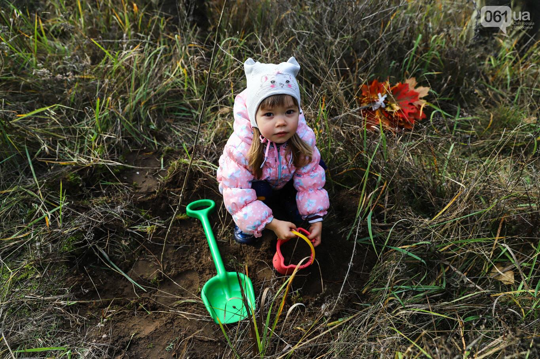 """""""Новая жизнь Хортицы"""" : на заповедном острове высадили 200 дубов и сосен, - ФОТОРЕПОРТАЖ, фото-34"""