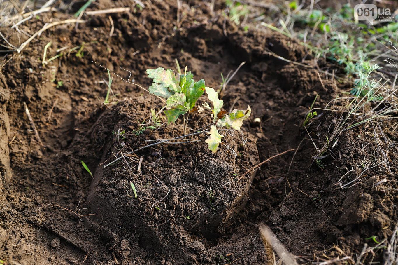 """""""Новая жизнь Хортицы"""" : на заповедном острове высадили 200 дубов и сосен, - ФОТОРЕПОРТАЖ, фото-35"""
