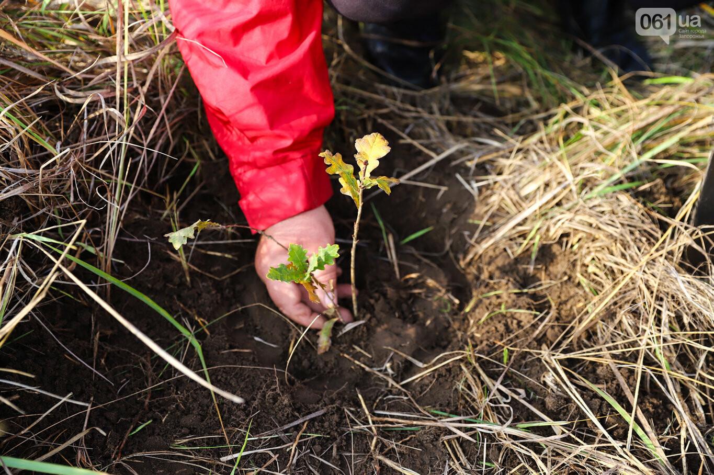 """""""Новая жизнь Хортицы"""" : на заповедном острове высадили 200 дубов и сосен, - ФОТОРЕПОРТАЖ, фото-41"""