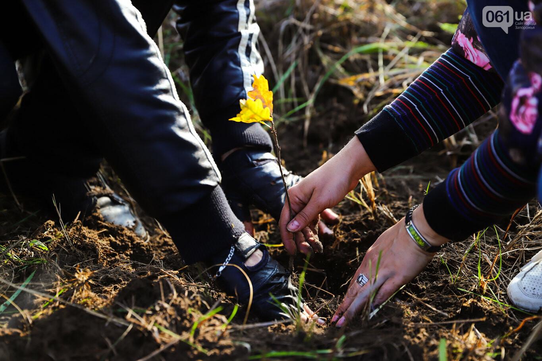 """""""Новая жизнь Хортицы"""" : на заповедном острове высадили 200 дубов и сосен, - ФОТОРЕПОРТАЖ, фото-43"""