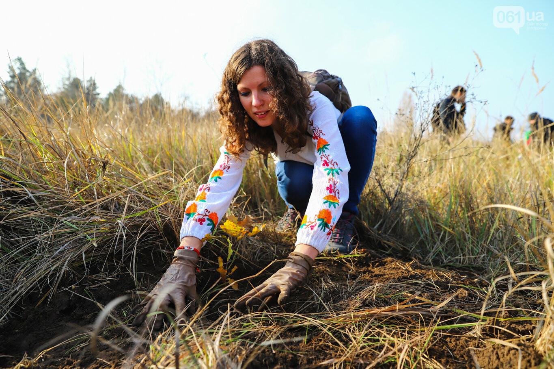 """""""Новая жизнь Хортицы"""" : на заповедном острове высадили 200 дубов и сосен, - ФОТОРЕПОРТАЖ, фото-8"""