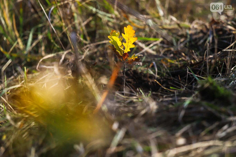 """""""Новая жизнь Хортицы"""" : на заповедном острове высадили 200 дубов и сосен, - ФОТОРЕПОРТАЖ, фото-45"""