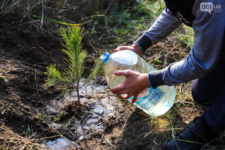 """""""Новая жизнь Хортицы"""" : на заповедном острове высадили 200 дубов и сосен, - ФОТОРЕПОРТАЖ, фото-31"""
