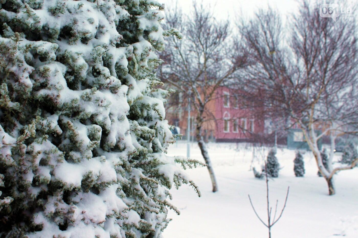 Ночная метель и заснеженный парк с высоты: жители Запорожской области делятся зимними фото , фото-7