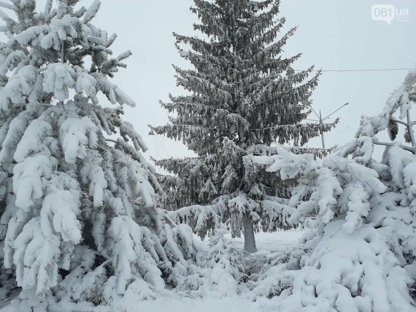 Ночная метель и заснеженный парк с высоты: жители Запорожской области делятся зимними фото , фото-14