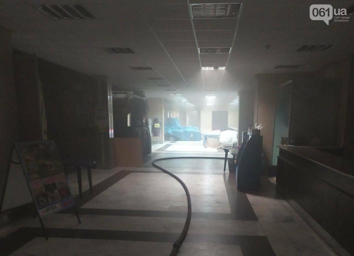 В Запорожье в ДК «Днепроспецсталь» горел выставочный зал: погибли несколько питомцев, - ФОТО, фото-3