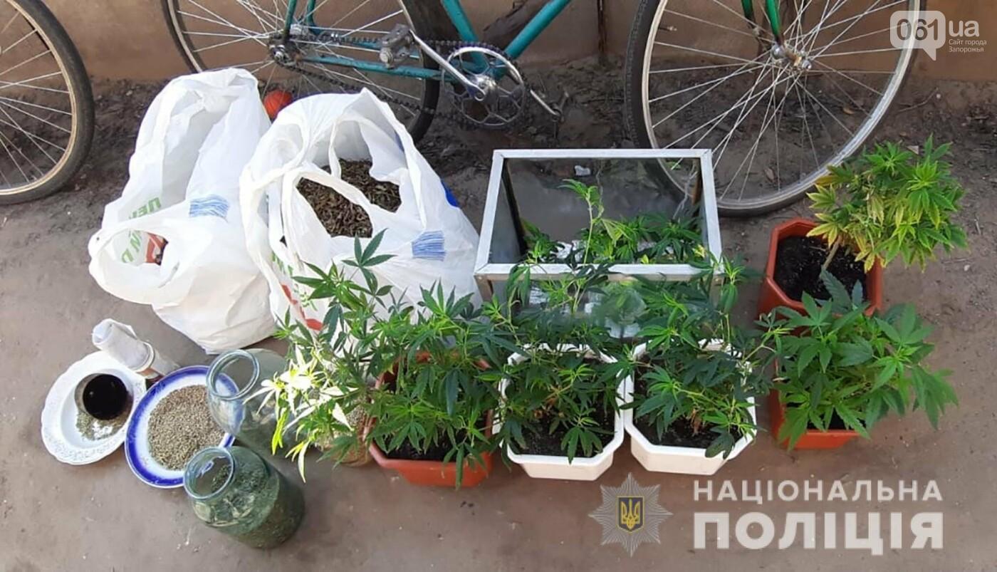 Новости запорожье марихуана семена конопли купить в вологде