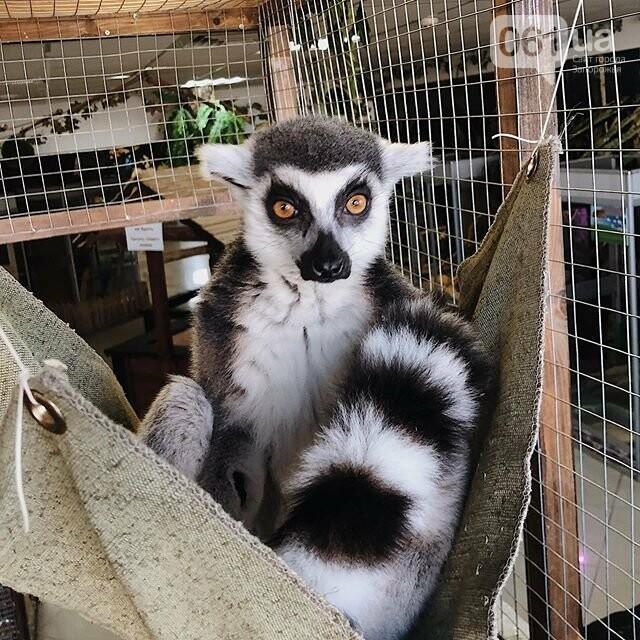 Мы в ответе за тех, кого приручили: Команда Трогательного зоопарка просит о помощи! Животных практически не осталось чем кормить!, фото-7