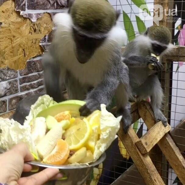 Мы в ответе за тех, кого приручили: Команда Трогательного зоопарка просит о помощи! Животных практически не осталось чем кормить!, фото-8