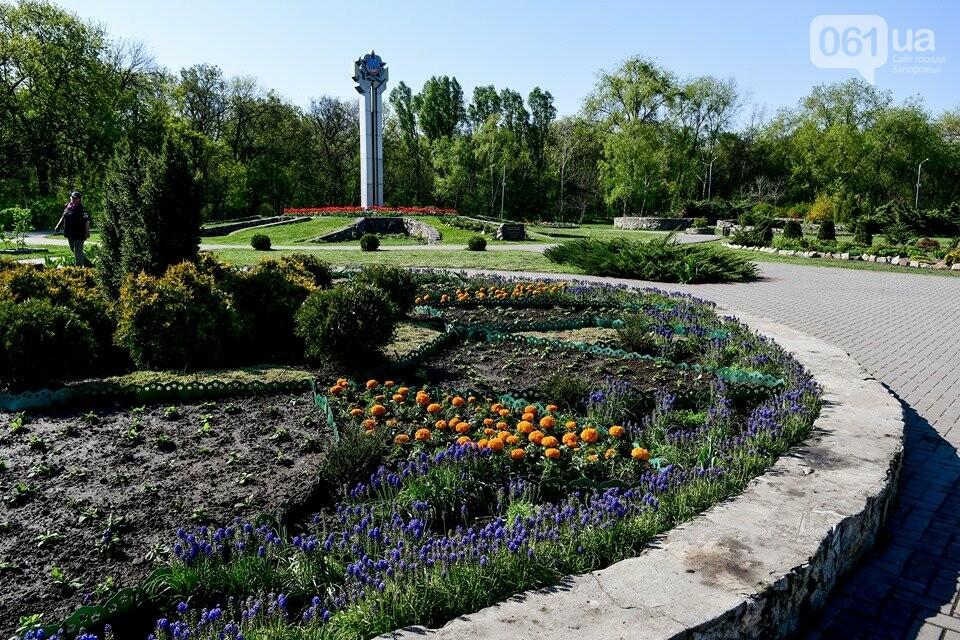 Запорожские парки готовят к майским праздникам — коммунальщики высаживают тысячи цветов, - ФОТОРЕПОРТАЖ, фото-18