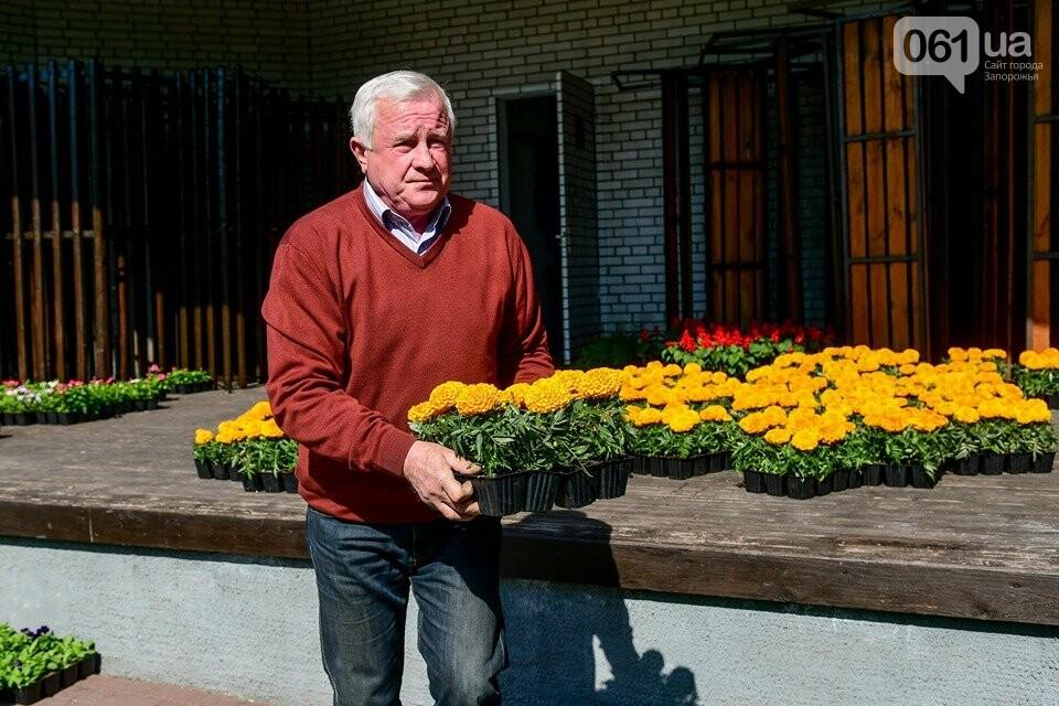 Запорожские парки готовят к майским праздникам — коммунальщики высаживают тысячи цветов, - ФОТОРЕПОРТАЖ, фото-17