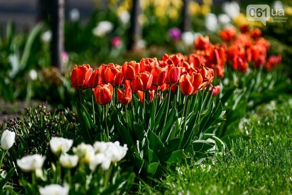 Запорожские парки готовят к майским праздникам — коммунальщики высаживают тысячи цветов, - ФОТОРЕПОРТАЖ, фото-16