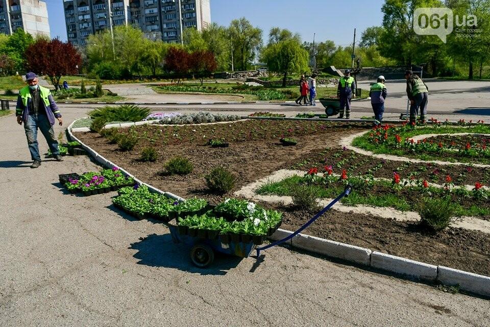 Запорожские парки готовят к майским праздникам — коммунальщики высаживают тысячи цветов, - ФОТОРЕПОРТАЖ, фото-9