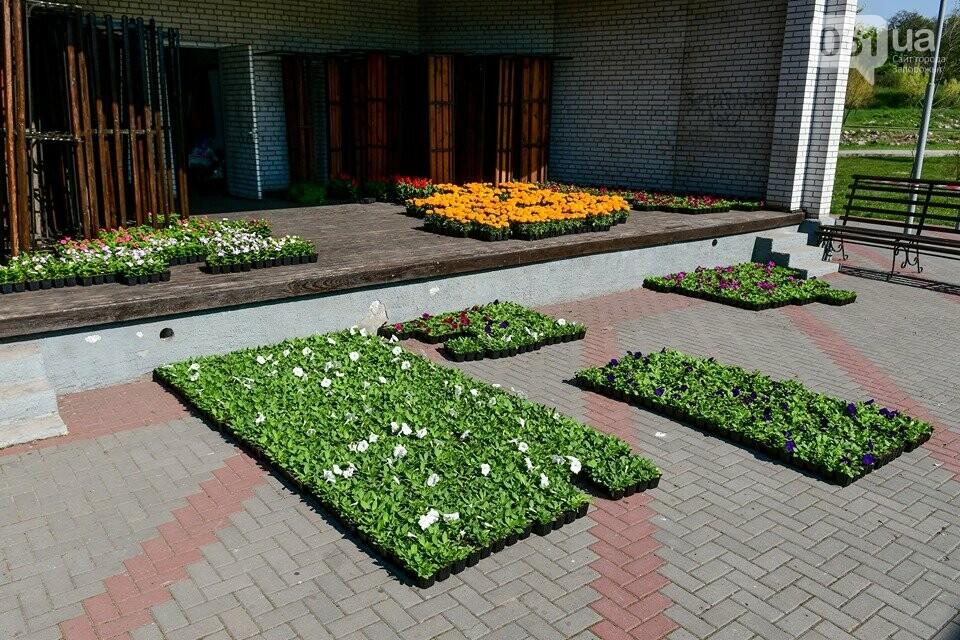 Запорожские парки готовят к майским праздникам — коммунальщики высаживают тысячи цветов, - ФОТОРЕПОРТАЖ, фото-11