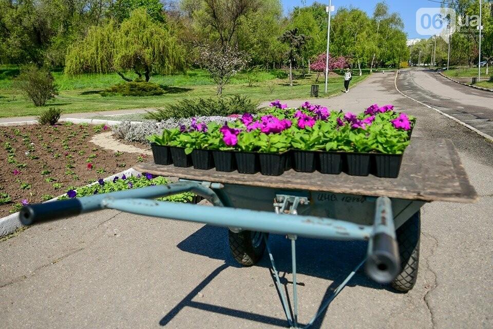 Запорожские парки готовят к майским праздникам — коммунальщики высаживают тысячи цветов, - ФОТОРЕПОРТАЖ, фото-3
