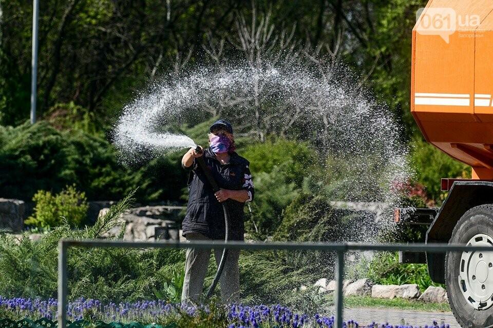 Запорожские парки готовят к майским праздникам — коммунальщики высаживают тысячи цветов, - ФОТОРЕПОРТАЖ, фото-15
