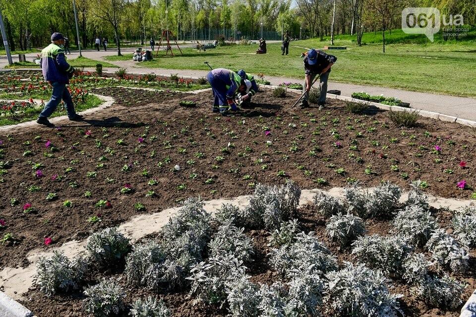 Запорожские парки готовят к майским праздникам — коммунальщики высаживают тысячи цветов, - ФОТОРЕПОРТАЖ, фото-5