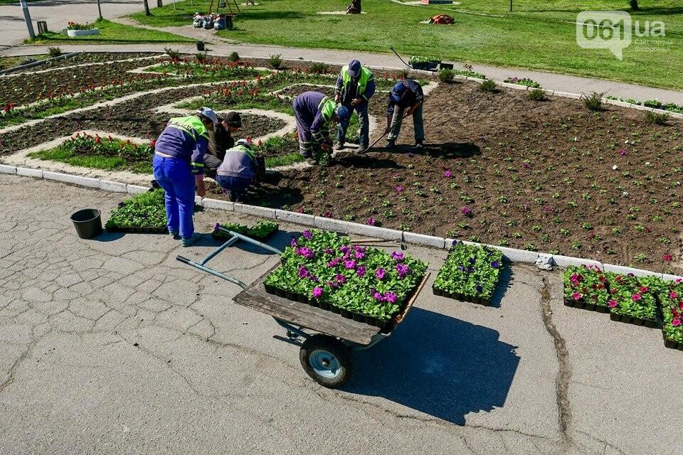 Запорожские парки готовят к майским праздникам — коммунальщики высаживают тысячи цветов, - ФОТОРЕПОРТАЖ, фото-2