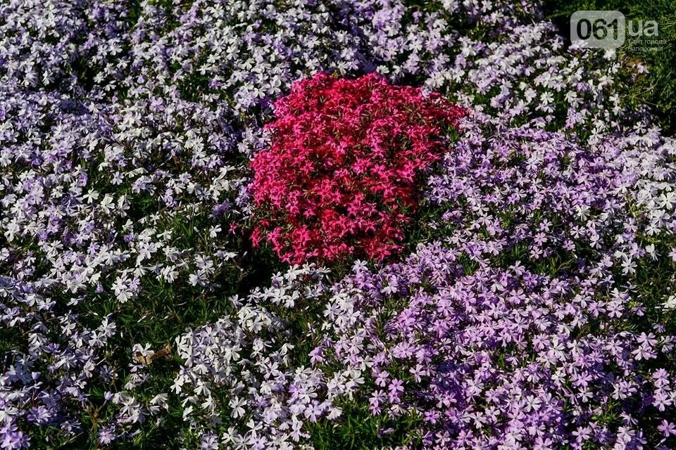 Запорожские парки готовят к майским праздникам — коммунальщики высаживают тысячи цветов, - ФОТОРЕПОРТАЖ, фото-7