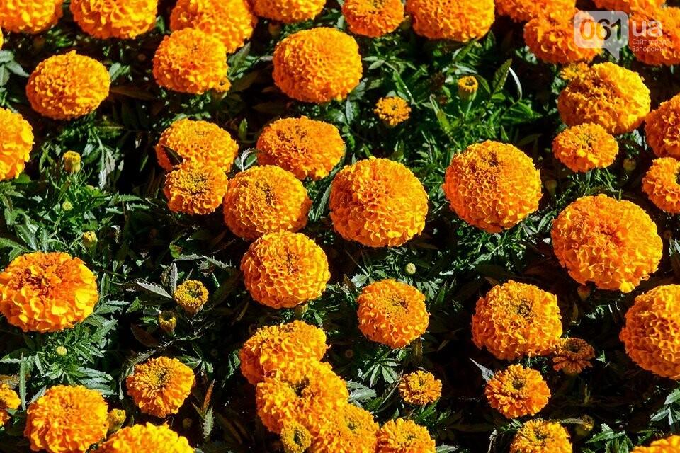 Запорожские парки готовят к майским праздникам — коммунальщики высаживают тысячи цветов, - ФОТОРЕПОРТАЖ, фото-13