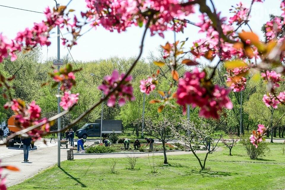 Запорожские парки готовят к майским праздникам — коммунальщики высаживают тысячи цветов, - ФОТОРЕПОРТАЖ, фото-12